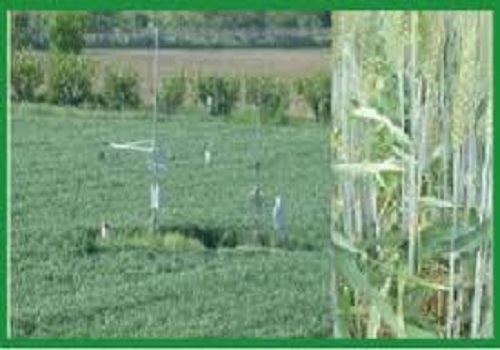 agricultural meteorology career opportunities